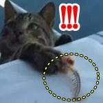 【感動】食事中の魚を盗もうとした猫!この猫の行動が運命を変えることに・・・【世界が感動!涙と感動エピソード】