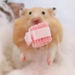 【ハムスター】可愛い写真満載!クリスマスプレゼントをもらったハムスターの反応は?おもしろ可愛い癒しHamster's reaction received Christmas gifts