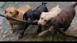 「絶対に笑う」あり得ないことをする犬★おもしろい犬のハプニング, 失敗画像集 #10