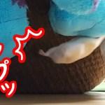 【ハムスター】検証!ハムスターがぬいぐるみに遭遇したらどうなる…?おもしろ可愛い癒しWhat if a hamster encounters a stuffed animal?