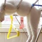 「猫かわいい」 すごくかわいい子猫 – 最も面白い猫の映画 #314