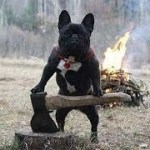 「面白い動物」あり得ないことをする犬, 猫・おもしろ犬, 猫のハプニング, 失敗集 #178