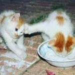 「面白い動物」あり得ないことをする犬, 猫・おもしろ犬, 猫のハプニング, 失敗集 #190