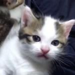 子猫を追跡するとかわいい結果に・・・
