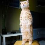 「かわいい猫」 笑わないようにしようとしてください – 最も面白い猫の映画 #381