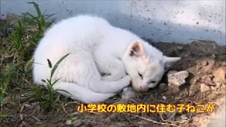 かわいい3匹の野良子ねこ 日向ぼっこしながらお昼寝編 野良猫さんぽ♪