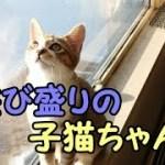 子猫は遊びの天才なのかな?!-かわいい子猫と面白い猫ベスト集24