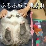 超もふもふな猫が超かわいい!!