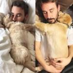 2019「絶対笑う」最高におもしろ犬,猫,動物のハプニング, 失敗画像集 #12