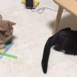 ひのきに尻尾でビンタする猫がかわいい