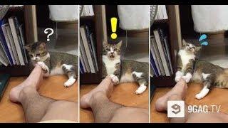 「かわいすぎる猫」 思わずに笑っちゃうかわいい猫のおもしろハプニング動画集