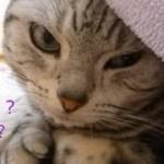 添い寝中、猫に休出だと言ったらスゴイ目で睨まれたっ ~一緒に居たい!結局猫を説得できなくて… –