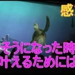 🔵【感動】くじけそうになった時 夢を叶えるには?【タートルトーク】東京ディズニーシー