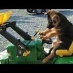 「面白い動物」あり得ないことをする犬, 猫・おもしろ犬, 猫のハプニング, 失敗集 #261
