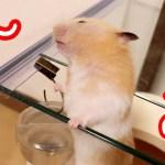 ハムスターの脱走!すさまじい執念が逆に可愛い!可愛い癒しおもしろ動物The obsession with the hamster's escape is tremendous!