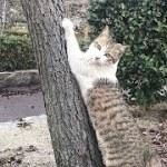 チビキジ猫は逃げるそぶりで遊びたいだけw かわいい猫動画