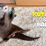 カワウソコタローとハナ 1日中おもしろい動きをするキュートなコタロー Otter Kotaro&Hana Life is Like a Play