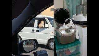 強烈すぎ!どうしてこうなった!動物たちの面白い行動がじわじわくるw~Funny behavior of animals.