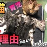 【感動】子猫を父猫がよく育児すると思ったら…その理由がすごかった。母猫からのテレパシー!?