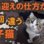 【ルナ#23】結局、子猫のお出迎えはカワイイ♪【サイベリアン】