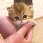ママのあとをついて行く可愛い子猫😻 【PECO TV】