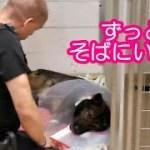 【感動実話】ずっとそばにいるよ 負傷した警察犬に寄り添う警察官の姿に感動の声