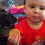 2019 犬や猫と遊ぶかわいい赤ちゃん – おかしい赤ちゃんコンピレーション#335