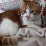 猫の顔芸!2回もびっくりした表情をするあーにゃんに笑い