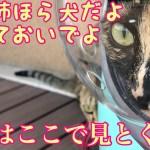 お散歩を楽しむ猫がかわいい〜病院も行ってきたよ!〜