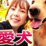 台湾人ズズ、可愛い愛犬と散歩する。