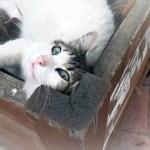 驚きと笑いがいっぱいの猫とのお散歩・珍道中