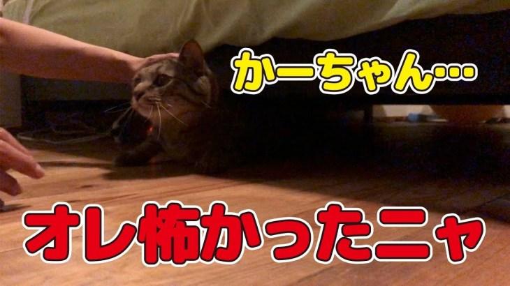 突然の雷雨と轟音にビックリして隠れる猫と優しく落ち着かせる母