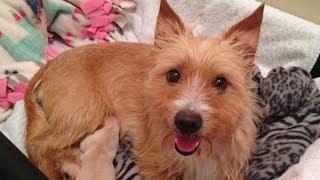 【感動】我が子を失った母犬は狂暴になってしまった。この犬を救ってくれたきっかけとは!?【素敵な話】