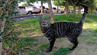 顔見たら挨拶してくる野良猫がカワイイ