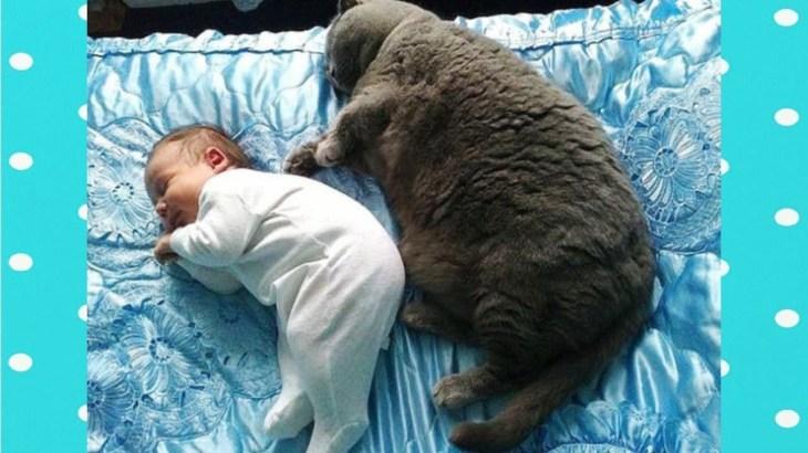 【面白い動画】太りすぎの猫の日はどうですか || 面白い赤ちゃんとペット