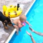 【犬と赤ちゃん仲良し】最高におもしろい赤ちゃんと犬のハプニング 🐶 赤ちゃんと犬絶妙な関係