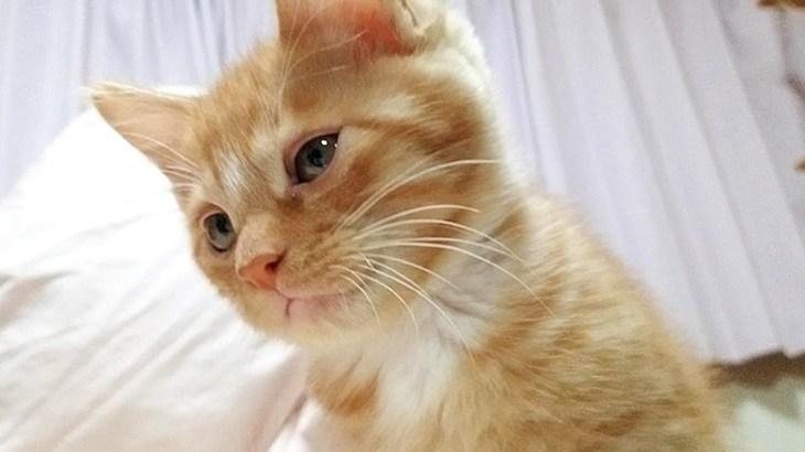 白い靴下がかわいい子猫、素敵な名前をもらう