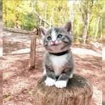 「面白い動物」何回見ても笑っちゃう犬, 猫の面白いハプニング・失敗画像集