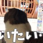 可愛い女子に会いたい!な猫