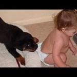2019 犬や猫と遊ぶかわいい赤ちゃん – おかしい赤ちゃんコンピレーション#427