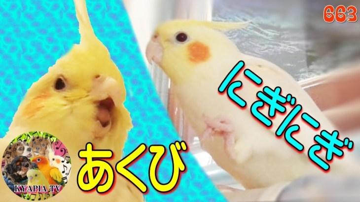オカメインコ♥おしゃべり・あくび・にぎにぎ♥かわいいエマの動画 Cute Cockatiel