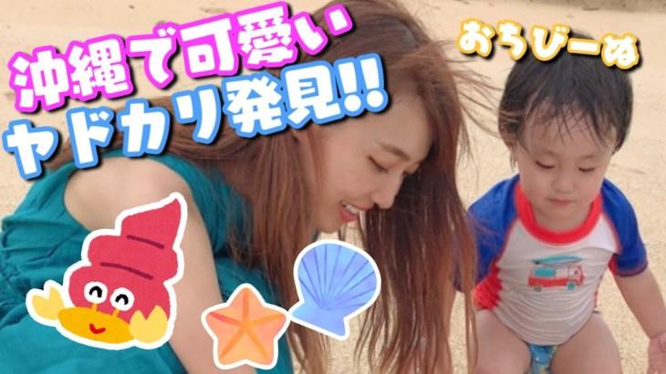 【アレク&のんちゃん】沖縄県で可愛いヤドカリ発見!!