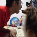【可愛いシェルティ】犬が人の顔を舐めるについて