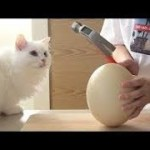 Funny and Cute Dog and Cat, Animal Compilation 2019💗おもしろい犬と猫のハプニング集 #439
