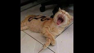 猫vsおもちゃ:面白い猫のおもちゃ反応編集#469