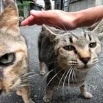 ASMR⁉ ゴロゴロ音が超凄い野良猫がやって来た