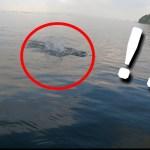 【水面爆発】釣れた瞬間!予想外の大青魚にビックリ‼️