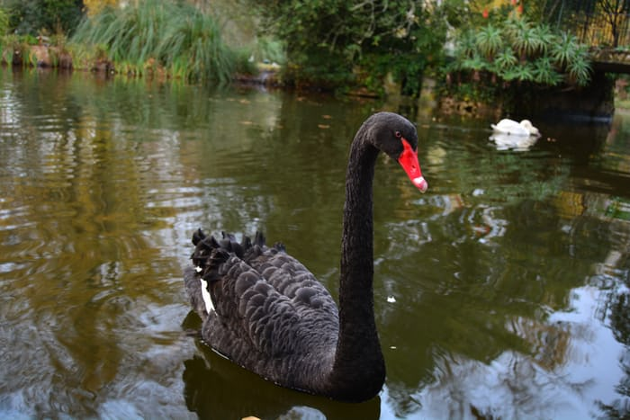 A Sovereign Individual must have Black Swan resilience. An ability to survive changing times. An analog hedge in a digital world.