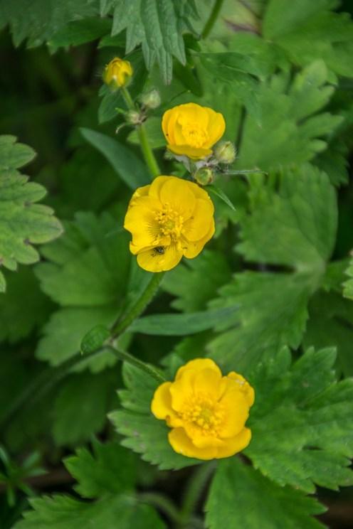 Beautiful flora on Whiddy Island