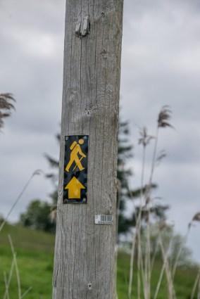 Whiddy-Walking-3397